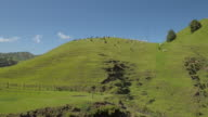 Alpacas grazing on a hilltop