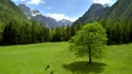 WS AERIAL Alpine Meadow
