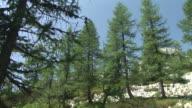 HD: Alpine nature