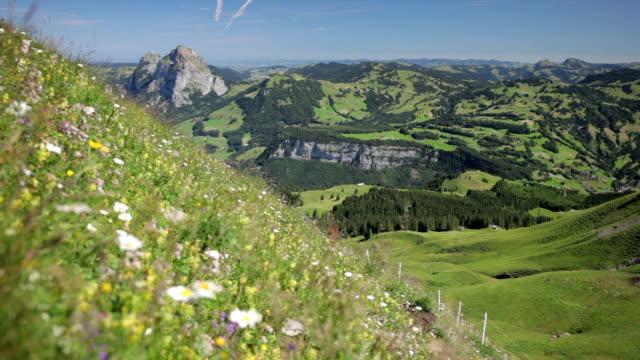 Alpine pastures