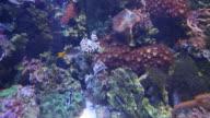 Alseund, the aquarium