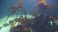 Alseund, the aquarium, water plants