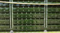 Alternative Energy: production of micro algae for regenerative power supply.