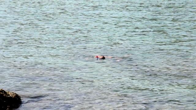 Amateur Diver In The Sea