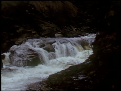 [Amateur Film: Appalachians, 1946] - 2 of 17