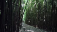 Amazing Bamboo Forest, Maui, Hawaii