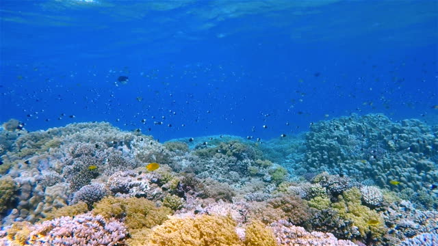 Amazing Coral reef with lot of fisch on Red Sea