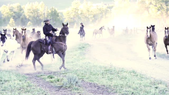 American Cowboy Rounding Up Horses on Montana Ranch