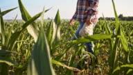 SLO MO American farmer walking in the field