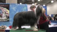 American Kennel Club Meet the Breeds 2012 at Jacob Javitz Center on October 21 2012 in New York New York