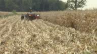 WS, Amish farmer harvesting corn with horse drawn wagon, rear view, Nappanee, Indiana, USA