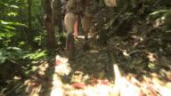 amputee hiking through the jungle