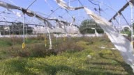 An abandoned greenhouse in Moshav Netiv HaAsara a cooperative farming community that is located approximately 400 meters from the Palestinian town of...