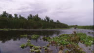An airboat skims across the surface of a swamp, disturbing lily pads.