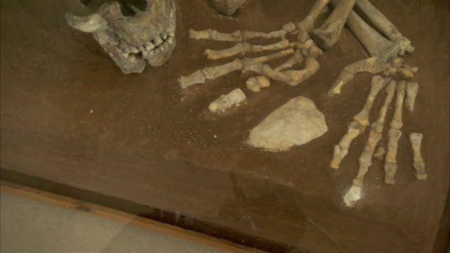 An ancient skeleton on display at the Rockefeller Museum in Jerusalem. Available in HD.
