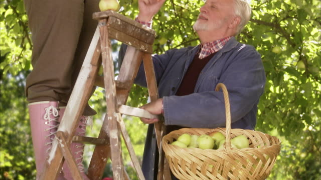 An elderly couple picking apples a sunny day Sweden.