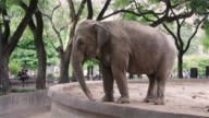 MS An elephant in Buenos Aires zoo / Buenos Aires, Argentina