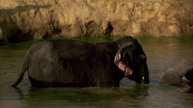 An elephant sprays itself with water. Available in HD