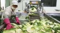 An employee places washed cabbages on a conveyor belt on the production line at the Gamchilbaegi Co kimchi factory in Gwangju South Korea on Tuesday...