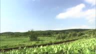 An Idyllic Scenery Of Hokkaido