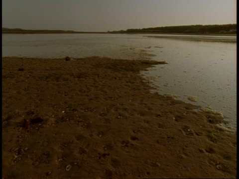 An inlet slowly oozes over wet sand.