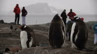 An international expedition made up of 80 young people from all corners of the world has arrived in Antarctica They're being led by the British polar...