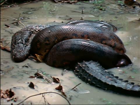 Amazon river animals anaconda