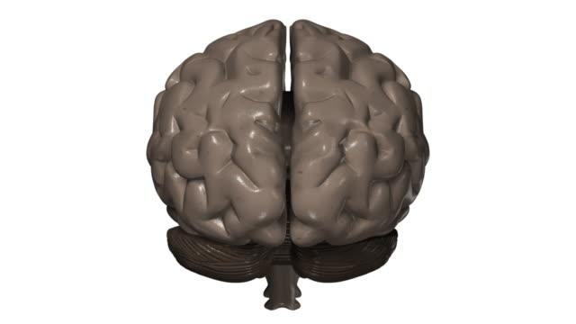 Analysis of human brain