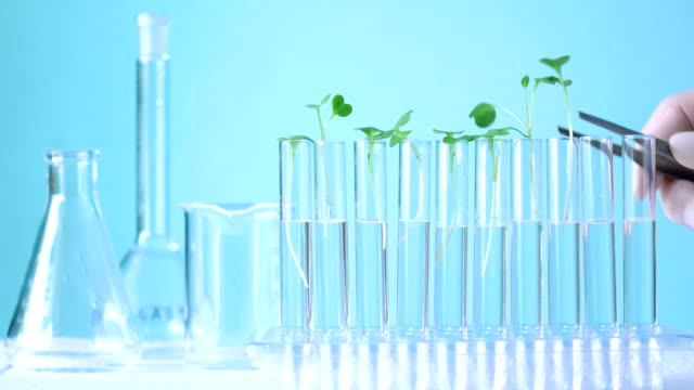 analysis vegetable in laboratory