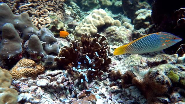 Anchor Damaged Coral Fragile Ecosystem Ocean Environment