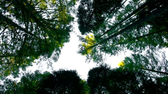 Oude bos met hoge boom