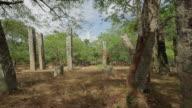 MS PAN Ancient overgrown, unnamed ruins near Mirisavatiya Dagoba / Anuradhapura, North Central Province, Sri Lanka