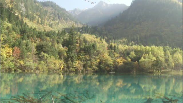 Ancient tree branches at bottom of Five Flower Lake, Jiuzhaigou, China