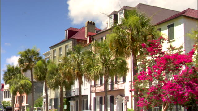Angled WS Row houses Cabbage palm trees Iconic Charleston No people