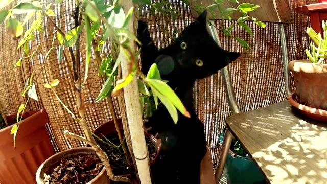 Nervoso simpatico gatto nero attacchi della telecamera