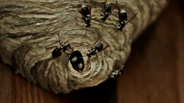 angry wasps