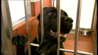Animal adoption scheme for pets Battersea Dogs and Cats Home INT Dogs in kennels