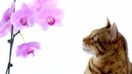 Animal Cinemagraph (photo in Motion) of a Cat with a flower