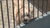 KTLA Animal Shelter in Orange County
