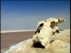 Animal skull sits beside river flowing through arid desert