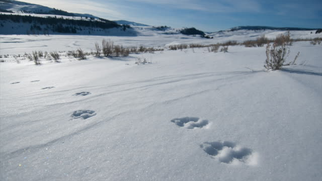 Animal tracks dot a snow-covered valley.
