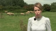 CCTV to be installed in England's abattoirs Leicestershire EXT Sheep along in field Reporter to camera Charles Sercombe chatting to reporter as along...