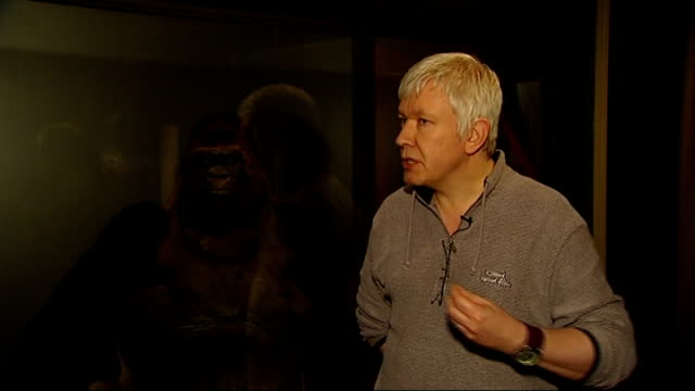 Guy the gorilla goes on show at Natural History Museum GVs amd interview Richard Sabin SOT it was towards end of primary school education on a school...