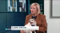 'Not Funny' campaign pushes for longer sentences for animal cruelty offenders ENGLAND London GIR INT Claire Horton STUDIO interview SOT