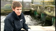 Penguins given antidepressants at Scarborough Sea Life Centre due to bad weather Josh Saunders interview SOT Penguins swimming in pool / Saunders...