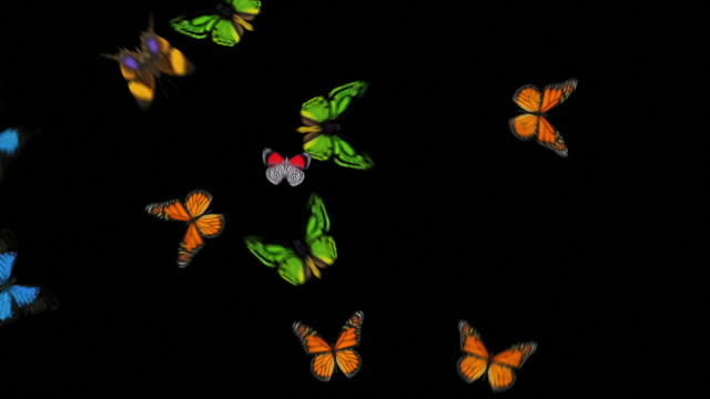 Animated Butterflies Fly In/Out - Mixed Species (With Alpha Variations)