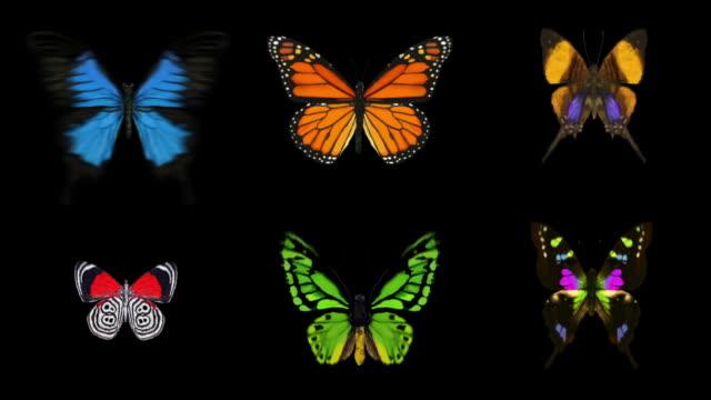 Animierte Schmetterlinge X6-mit Alpha (Full HD)