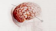 CGI, Animated human brain
