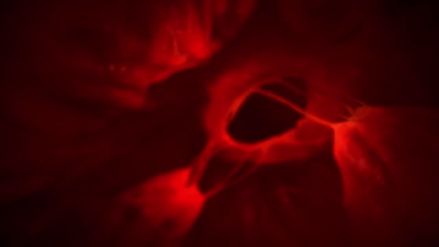 Animated sequence showing blood entering the heart and a contraction that sends the blood pumping around the body.