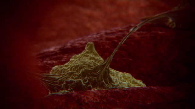Animated sequence showing T cells attacking cells infected by a flu virus.
